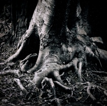 gnarly tree roots